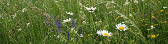 Extensive meadow (Arrhenatherion) - Mertert - 08.05.2007 © Simone Schneider