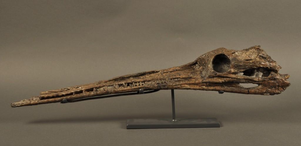 Steneosaurus gracilirostris