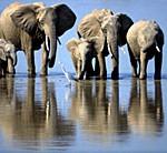 photo_elephant