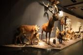 mammifères du luxembourg