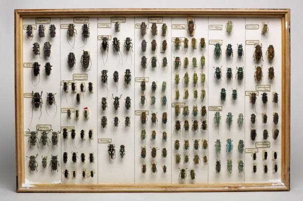 Insektensammlung