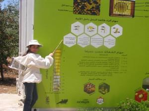 Bienen in Jordanien