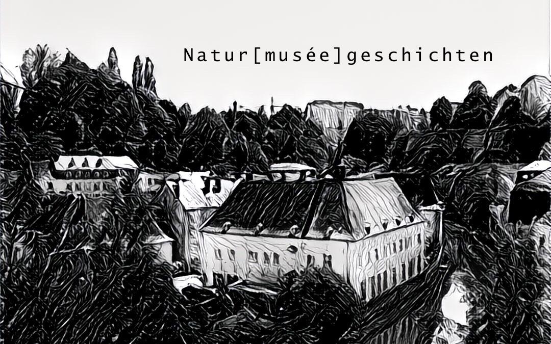 Naturmuséegeschichten