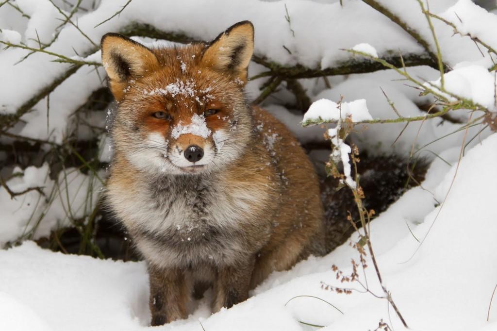 Nationalmuseum Fur Naturgeschichte Tiere Im Winter