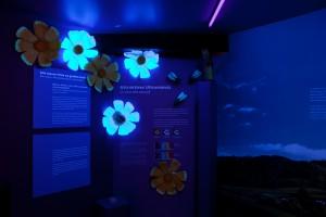 """Thema """"Ultraviolett Liicht"""" an der Ausstellung """"Farbenfroh"""" am Joer 2011 am 'natur musée'"""